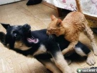 2012-06-13-catsdogsfight3