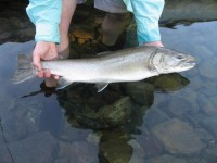 1487952324_732715_by_Collin_Nuismer_fisherman-holding-bull-trout-fish-in-hands-725x544