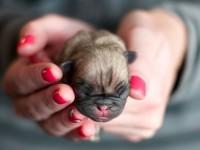 1487957646_puppy