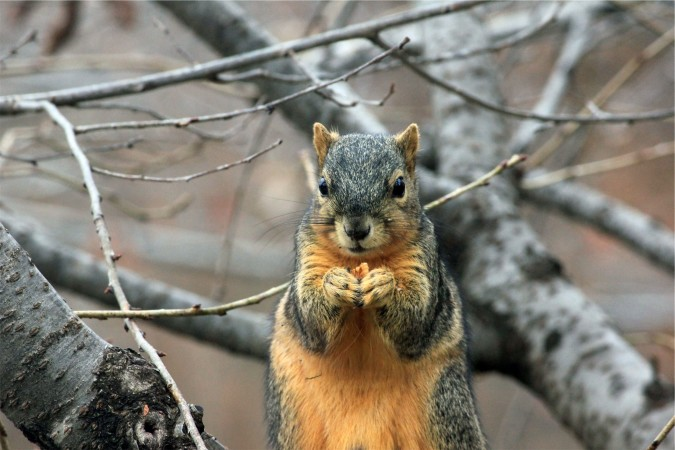 Image result for squirrels take over world