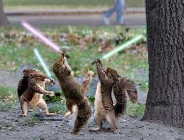 1490029104_squirrel-wars