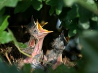 nest-384896_1920