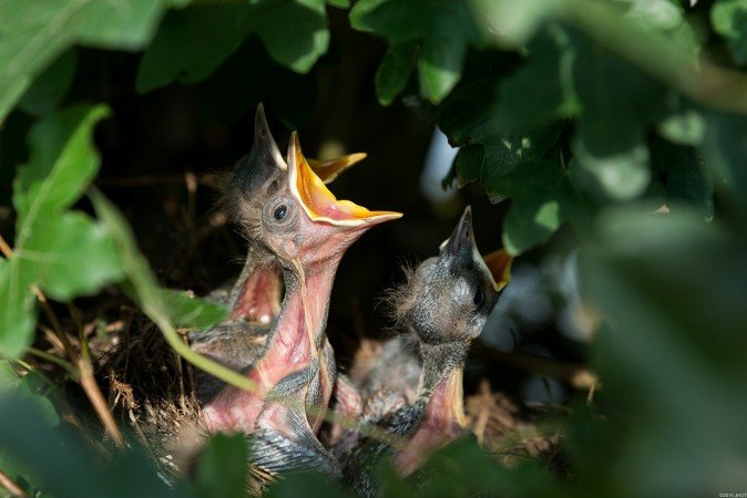 Write a poem from the perspective of a hungry baby bird.