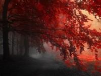 1490222990_3513437_by_archana_patel_229_1920x1080_red_tree