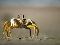 crab-1990198_1920