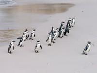 penguin-1719608_1920