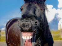 horse-1844792_1920