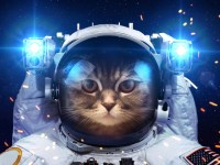 beautiful_cat_in_outer_space_by_vadimsadovski-d9asxcc