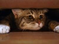 1491583593_kitty