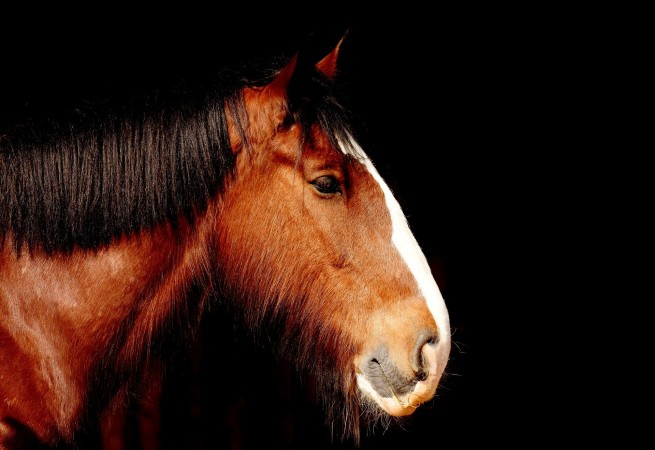 "Write a poem describing the texture of a horse's hair without saying the word ""horse."""