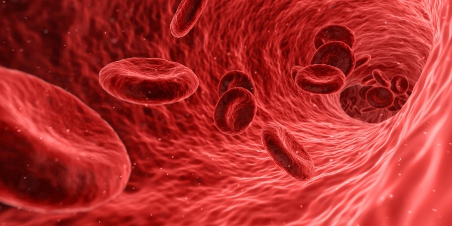 Write a poem from the perspective of a blood cell in the circulatory system.