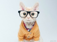 1494423681_cat