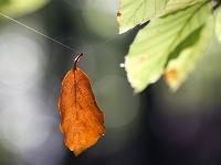 1494856245_leaf