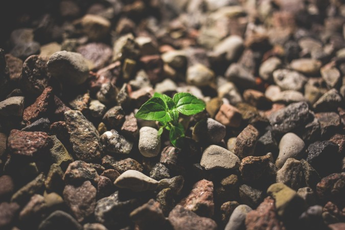 How can we grow and learn from failure?