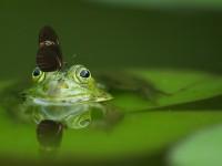 frog-540812_1920
