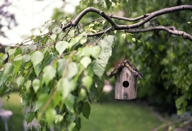 Pick a bird local to your community and study its habitat. Then, make a bird house based on what you learned and place it somewhere outdoors.