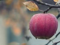 apple-1122537_1920
