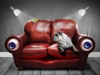 sofa-749629_1920