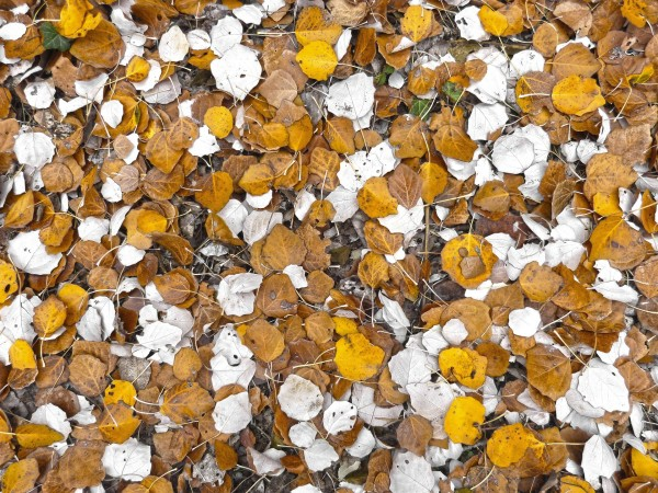 Do you love stepping on crunchy leaves? Write a story or poem about it.