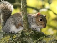 squirrel-nature_19-130269