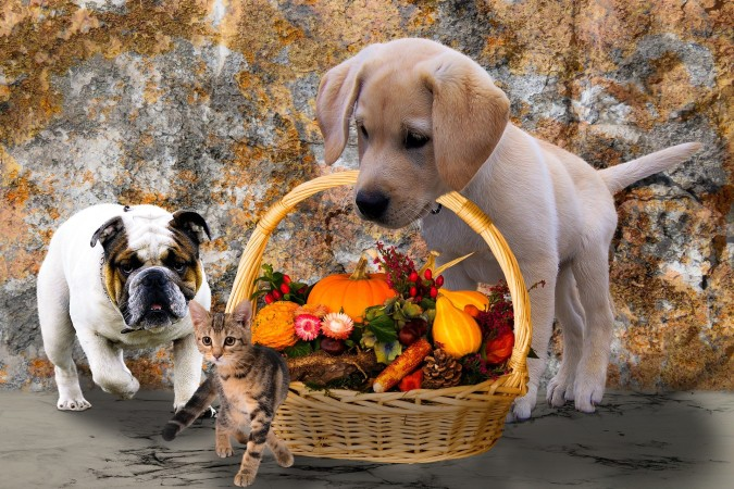 This year, baby animals are planning your Thanksgiving dinner!