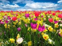 1508883401_327224_by_hans3595_spring-awakening-1197602_1920