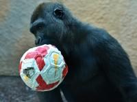 1509038245_6845270_by_hans3595_gorilla-2876058_1920
