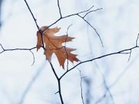 leaf-2893241_1920
