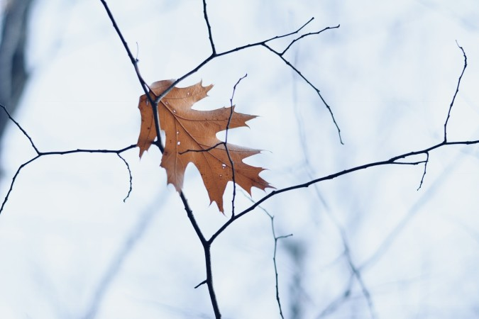 When do you feel like autumn is officially over?