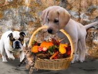 1510688577_6668289_by_hans3595_animals-2829373_1920