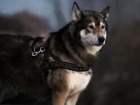 1521591787_dog