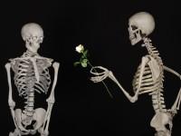 1521642248_2868046_by_hans3595_skeletal-601213_1920