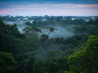 1200px-Brazilian_amazon_rainforest