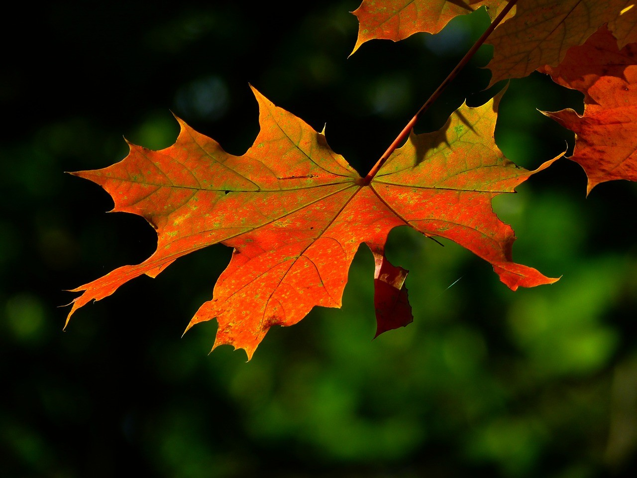Write a poem or monologue from the perspective of a leaf about to fall.