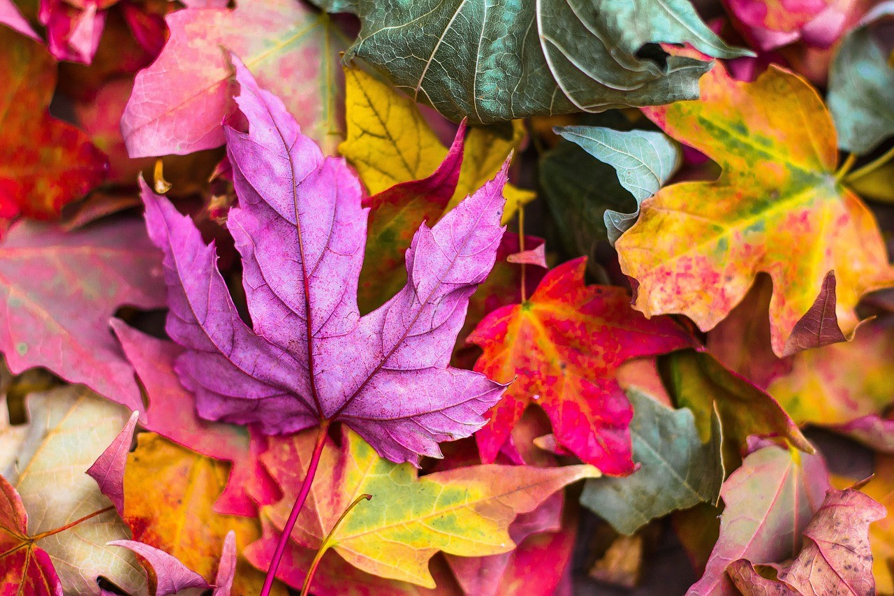 Write a poem about falling leaves without using standard color words: yellow, red, orange, brown.
