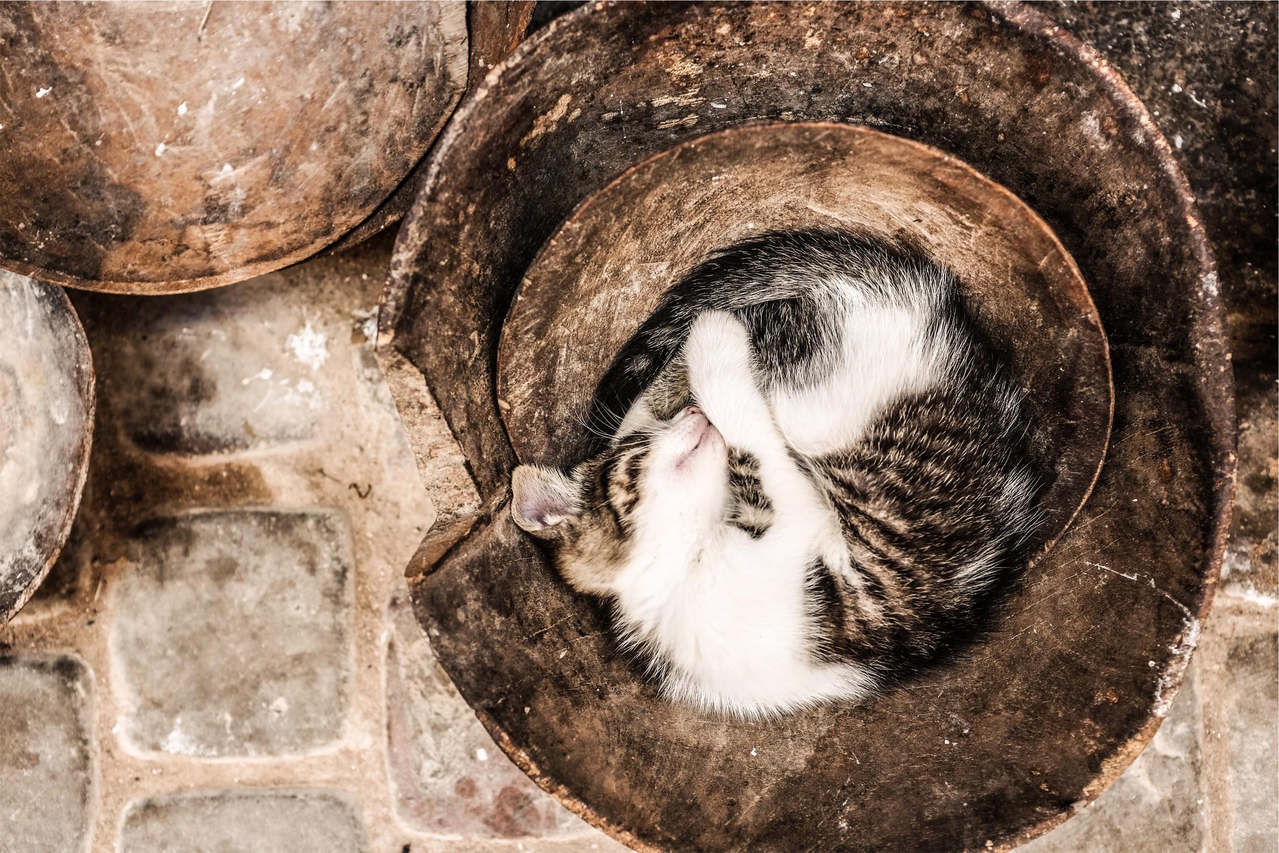 1541532995how-do-cats-do-this