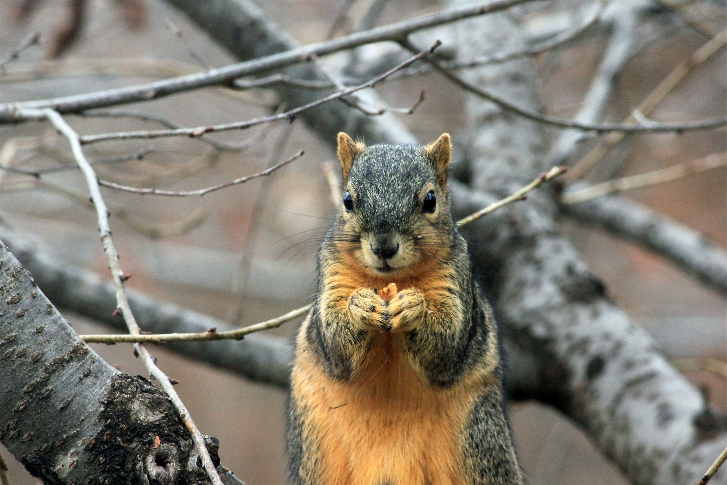 1542287811squirrel-plotting-to-take-over-the-world