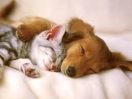 Do cats and dogs really hate each other?