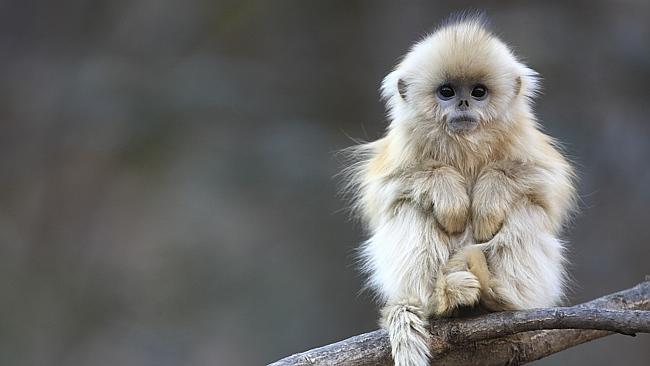 15514524829798502_by_jcody@lakeridgeschools.net_monkey