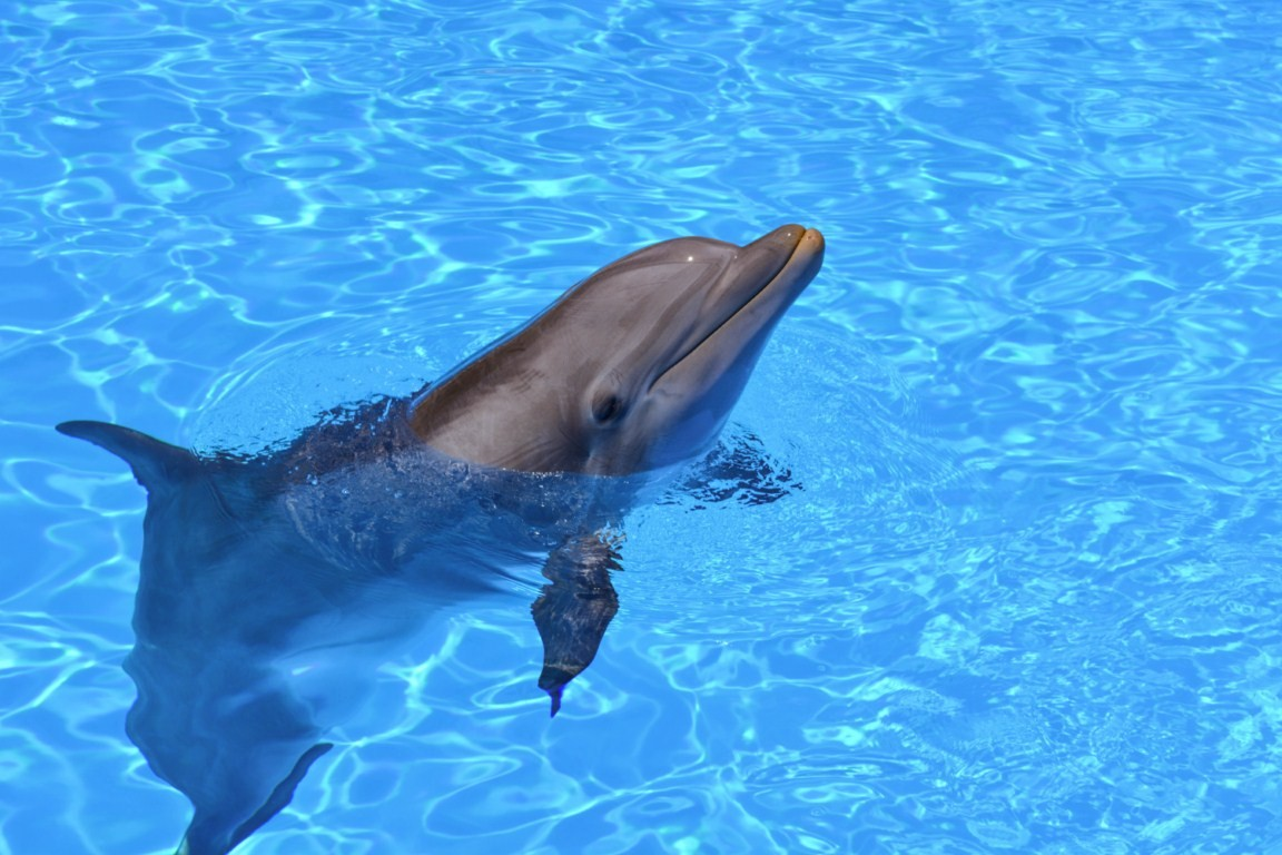 What do you think about dolphins?
