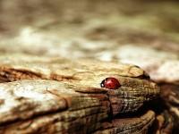 ladybug-354521_1920