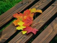 15702100814658195_by_hans3595_fall-foliage-1740841_1920