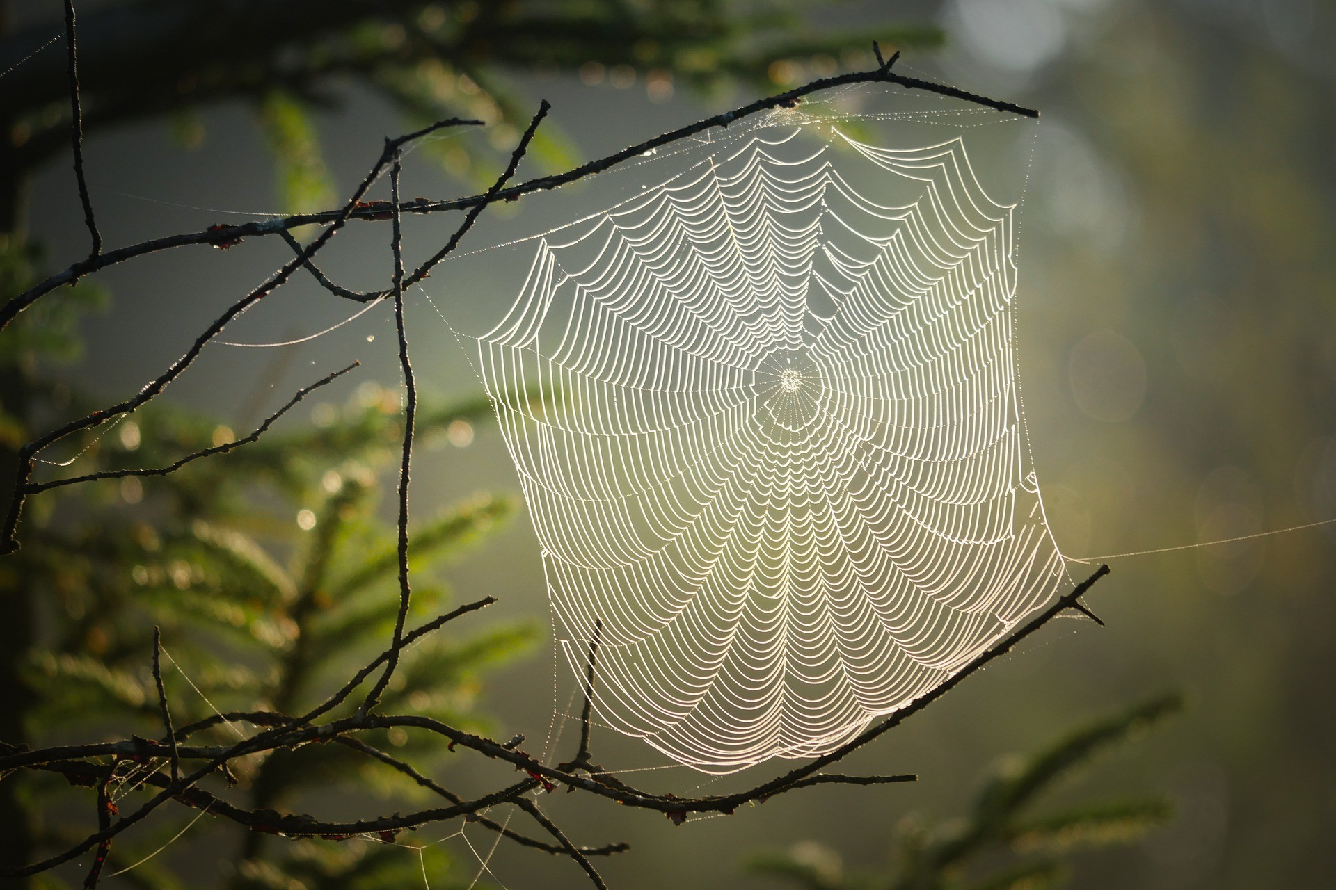 You are the spider that lives in this web. Tell about a day in your life.
