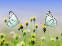 1571240723606017_by_hans3595_butterfly-1127666_1920