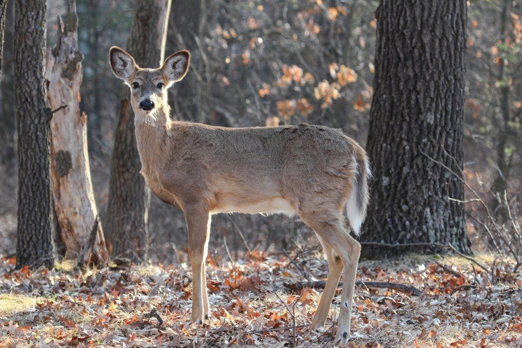 Helping Wisconsin's Wildlife