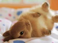 bunny-on-side