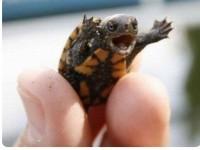 1572882145208882_by_MrsWatson_Writing-Turtle