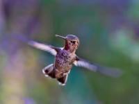 15861873514063009_by_hans3595_hummingbird-691483_1920