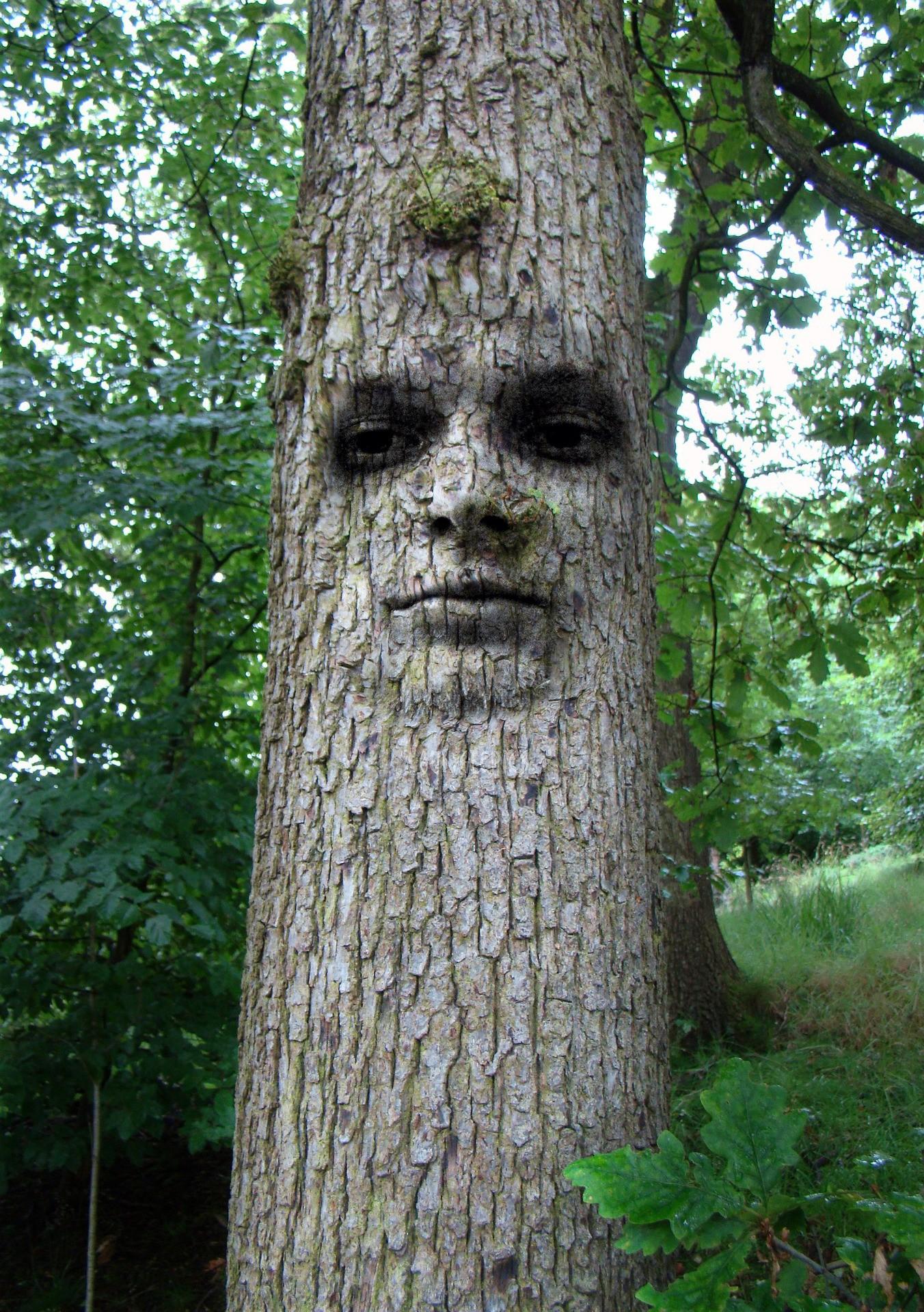 1596810718605633_by_hans3595_tree-1519868_1920