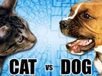 cats-versus-dogs-